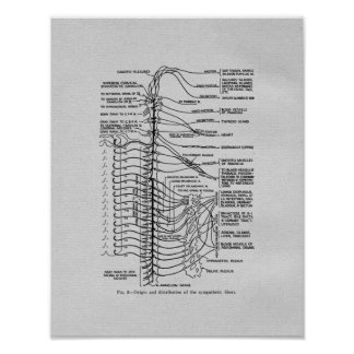 Chiropractic Spinal Nerves Vintage Print