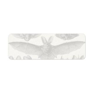 Chiroptera de Haeckel Etiqueta De Remitente