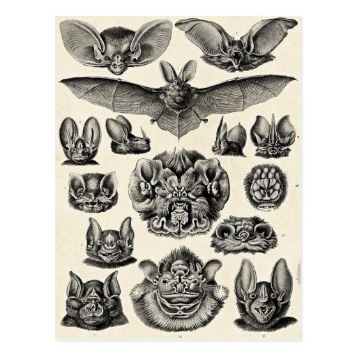 Chiroptera de Haeckel Postales