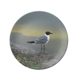 """Chirp! Chirp! - 8.5"""" Decorative Porcelain Plate"""