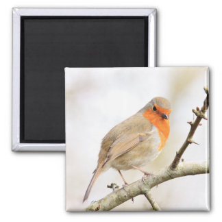 Chirpy Robin 2 Inch Square Magnet