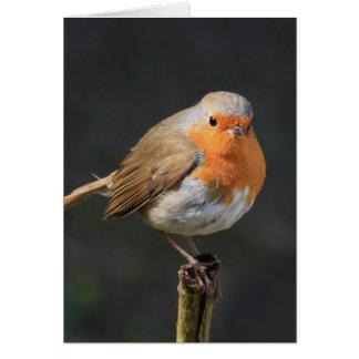 Chirpy Robin Card