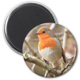 Chirpy Robin Magnet