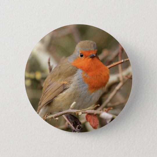 Chirpy Robin Pinback Button