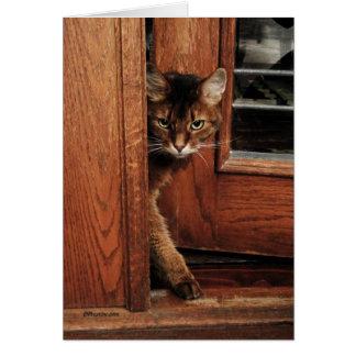 Chispa en la tarjeta somalí del gato de la entrada