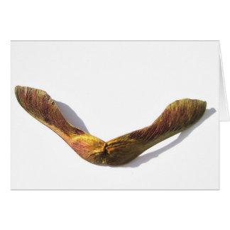Chispas de KIW: El arce se va volando la tarjeta