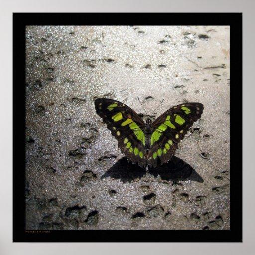 Chispas de KIW: Mariposa del dulce de Z Póster