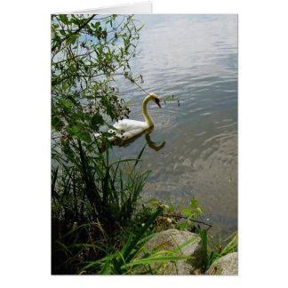Chispas de KIW: Tarjeta de seda del cisne de Z