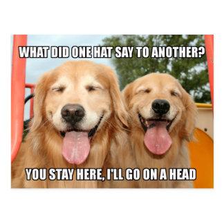 Chiste divertido Meme del gorra del golden Postal