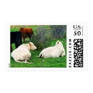 Chit Chat Postage