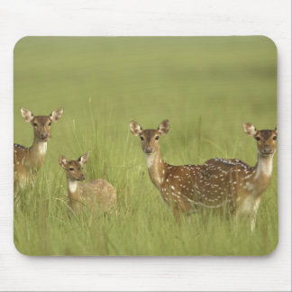 Chital Deers and a young one,Corbett National Mouse Pad