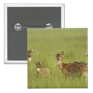Chital Deers and a young one,Corbett National Pinback Button