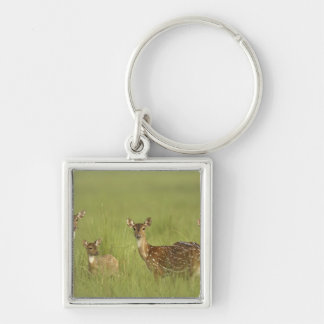 Chital Deers and a young one,Corbett National Silver-Colored Square Keychain