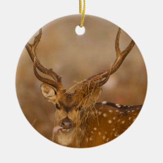 Chital or Cheetal, Spotted Deer, male grazing Ceramic Ornament