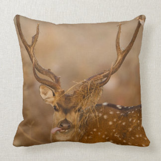Chital or Cheetal, Spotted Deer, male grazing Throw Pillow