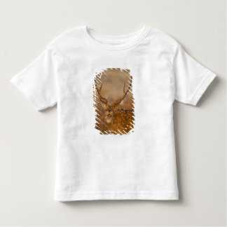 Chital or Cheetal, Spotted Deer, male grazing Toddler T-shirt