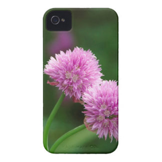 Chive blooms iPhone 4 cover