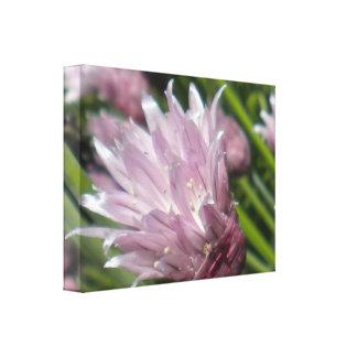 Chive Blossom Canvas Canvas Print