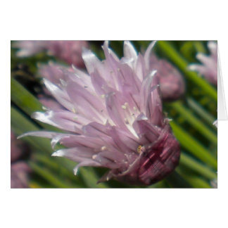 Chive Blossom Greeting card (blank)