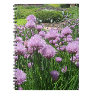 Chive Blossoms Notebook