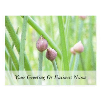 Chive Flower Buds Postcard