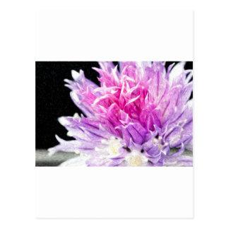 Chive Flower in Oil Postcard
