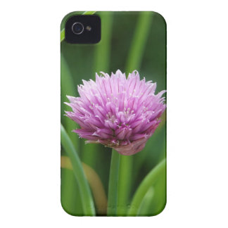 Chive flower iPhone 4 covers