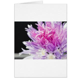 Chive Flower Macro Card