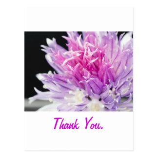 Chive Flower Macro Postcard