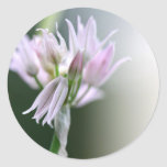 Chive flower stickers