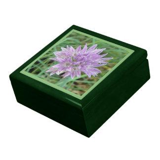 Chive Flowers: Allium Schoenoprasum Jewelry Box