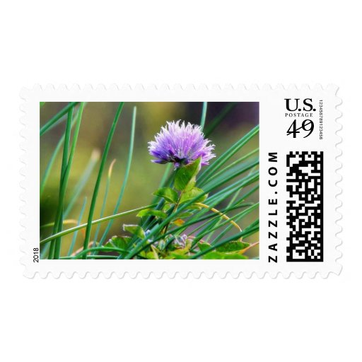 Chives Blue On Grass Stamps