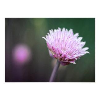 Chives flower macro card