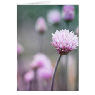 Chives flowering IV Card