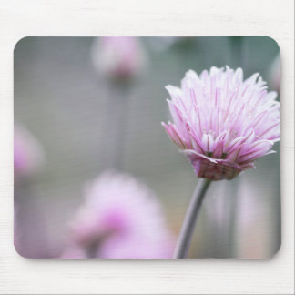 Chives flowering IV Mouse Pad