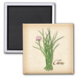 Chives Herb, Pink Flowers 2 Inch Square Magnet