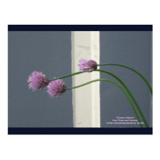 Chives in Bloom Postcard