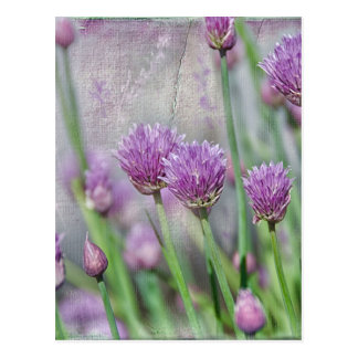 Chives in texture postcard