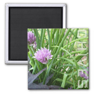 Chives, Magnet