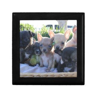 Chiwawa Puppies Gift Box