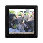 Chiwawa Puppies Gift Boxes