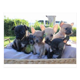 Chiwawa Puppies Postcard