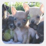 Chiwawa Puppies Square Sticker