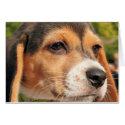 Chloe - Beagle Photo-19 card