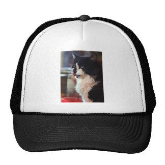 Chloe Licks Trucker Hat