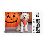 Chloe - Poochon - Photo-10 Postage Stamps