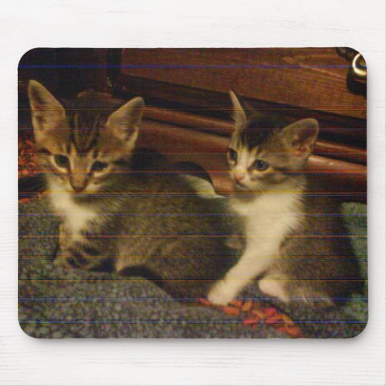 chloes 2 tabby stripe kittens 7-2-09 mouse pad
