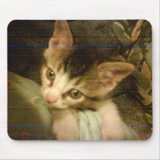 chloes tiny kitten age 6 wks 7-2-09 mouse pad
