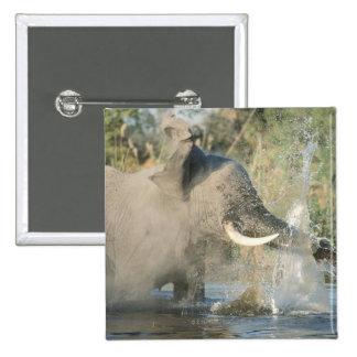 Chobe River Botswana Africa Pinback Buttons