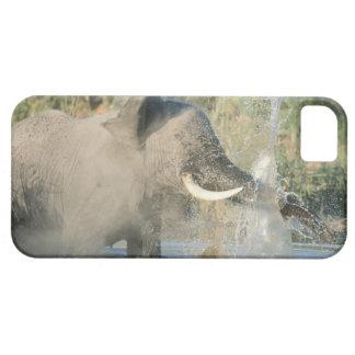 Chobe River, Botswana, Africa iPhone SE/5/5s Case